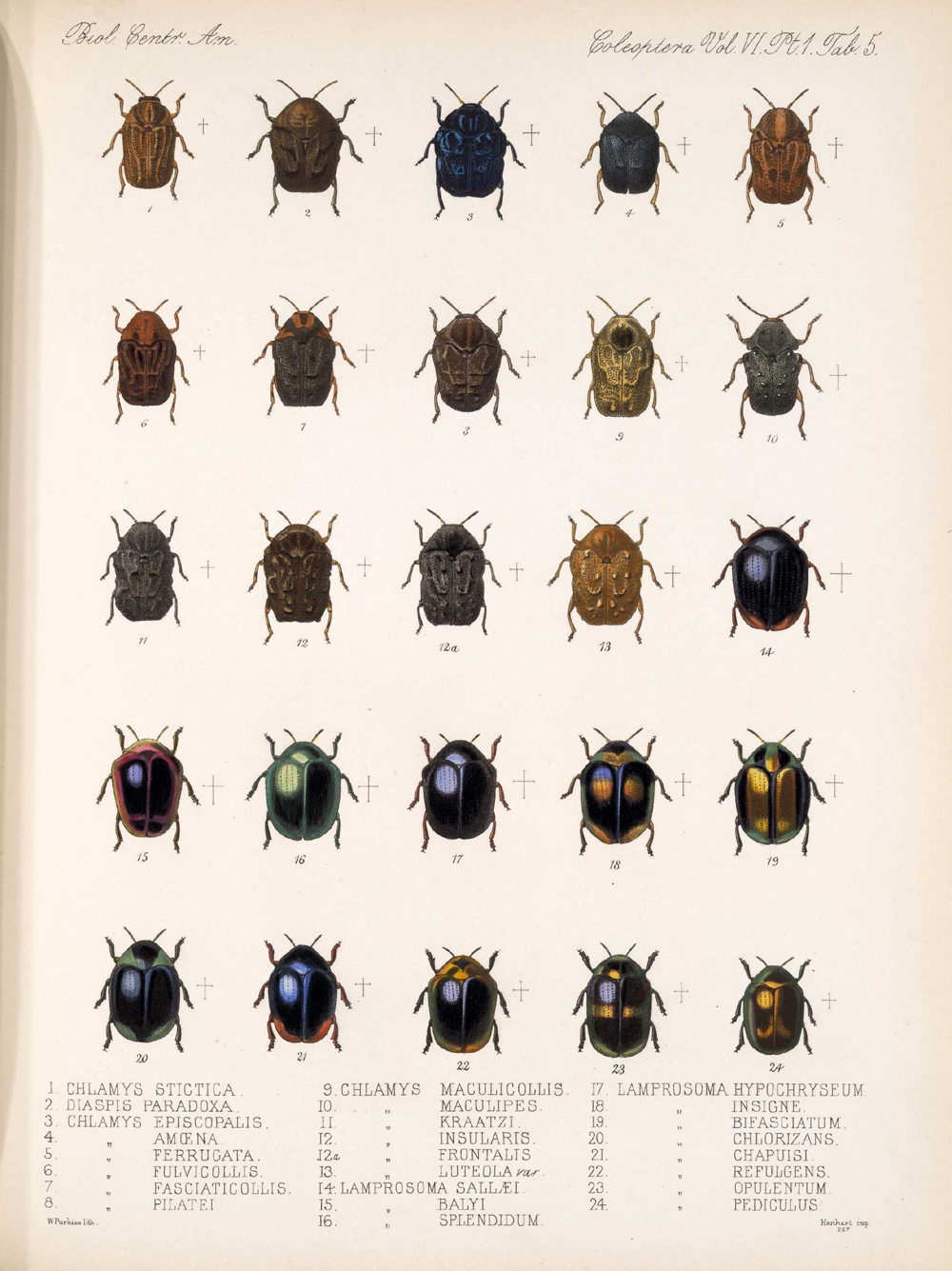 Beetles,  Image number:bca_12_06_01s_389