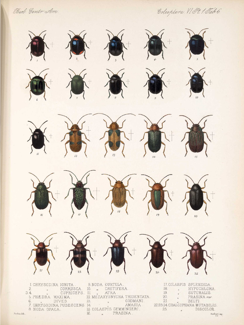 Beetles,  Image number:bca_12_06_01s_390