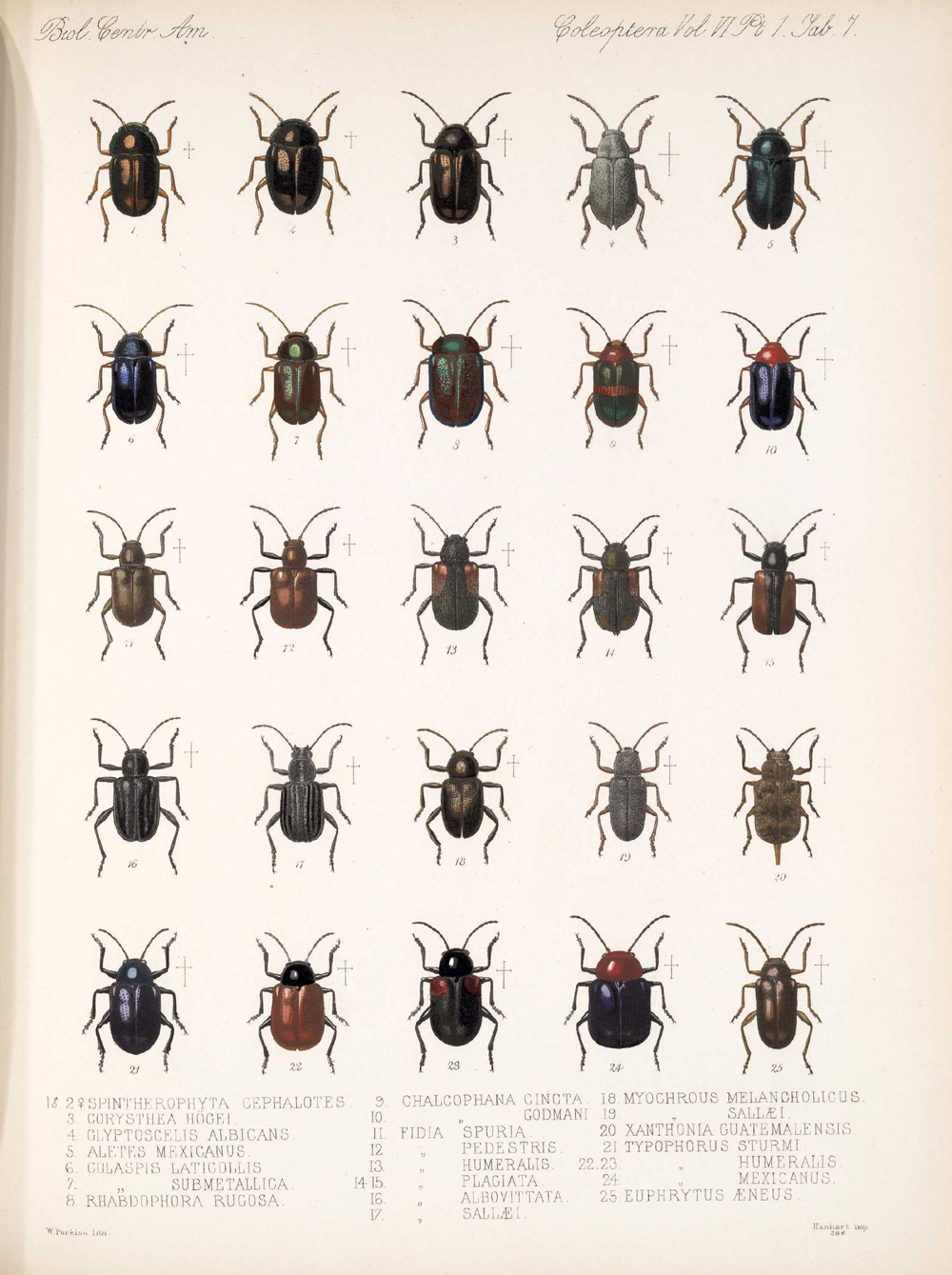 Beetles,  Image number:bca_12_06_01s_391