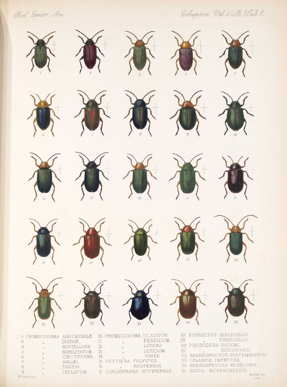 Beetles,  Image number:bca_12_06_01s_392