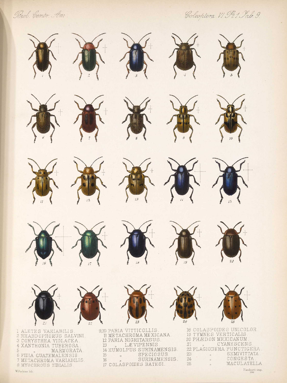 Beetles,  Image number:bca_12_06_01s_393