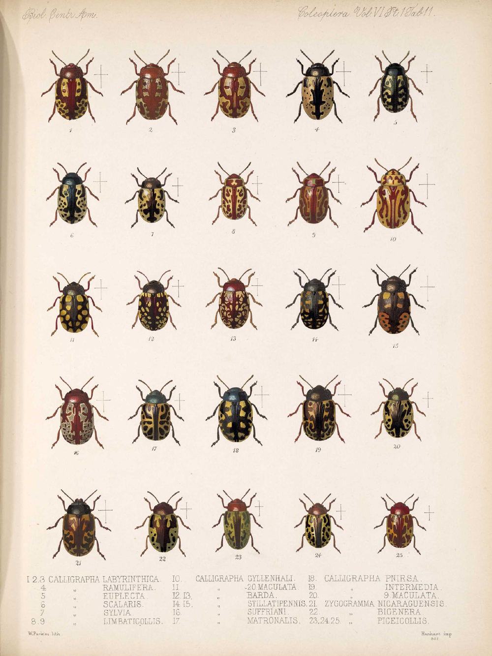 Beetles,  Image number:bca_12_06_01s_395