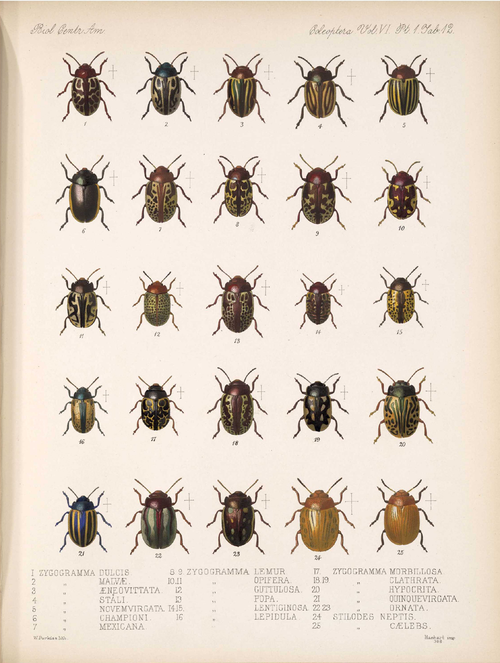 Beetles,  Image number:bca_12_06_01s_396