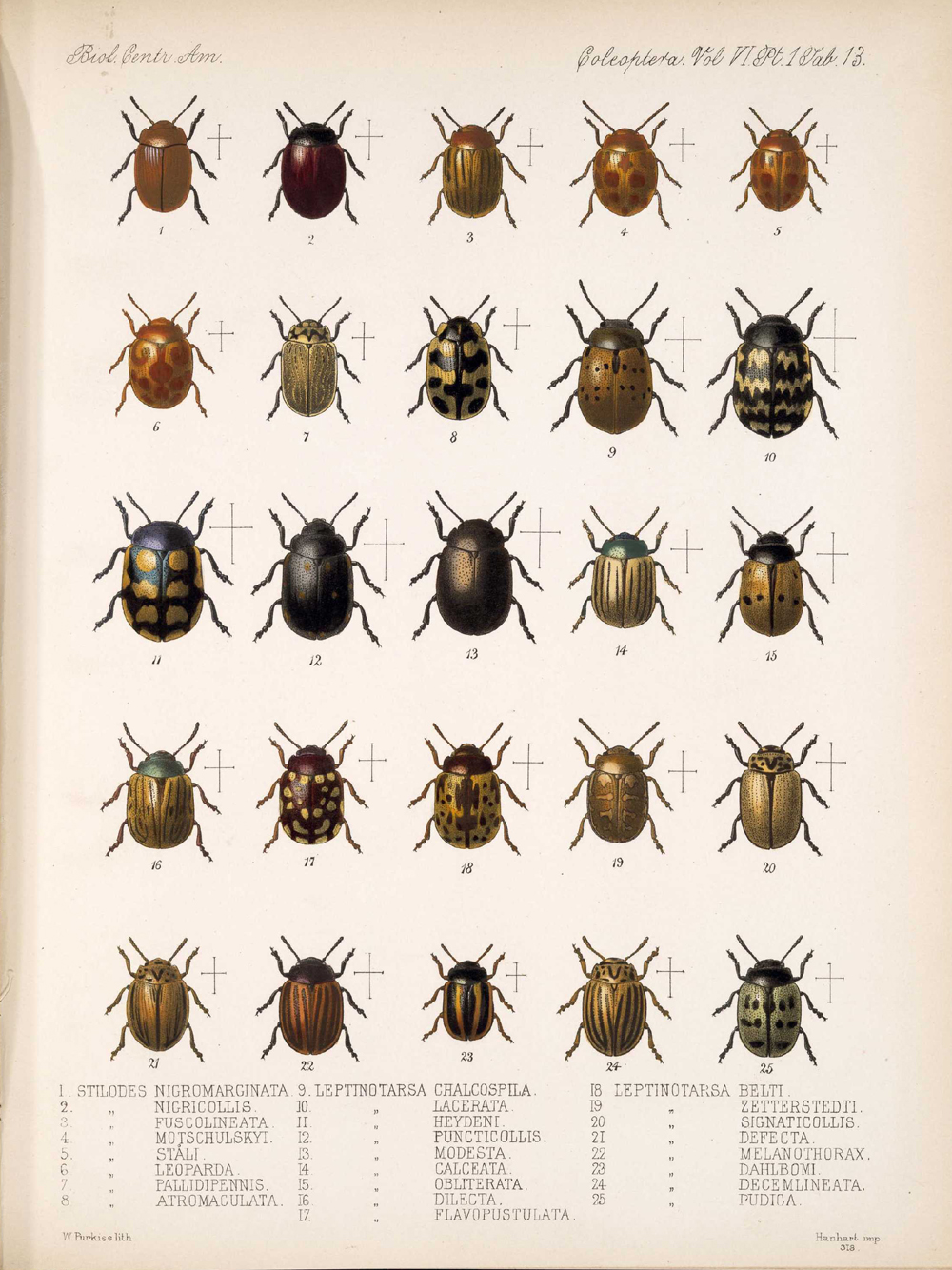 Beetles,  Image number:bca_12_06_01s_397