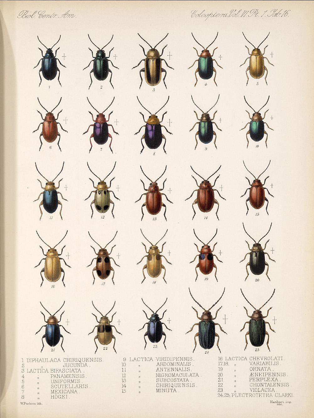 Beetles,  Image number:bca_12_06_01s_400