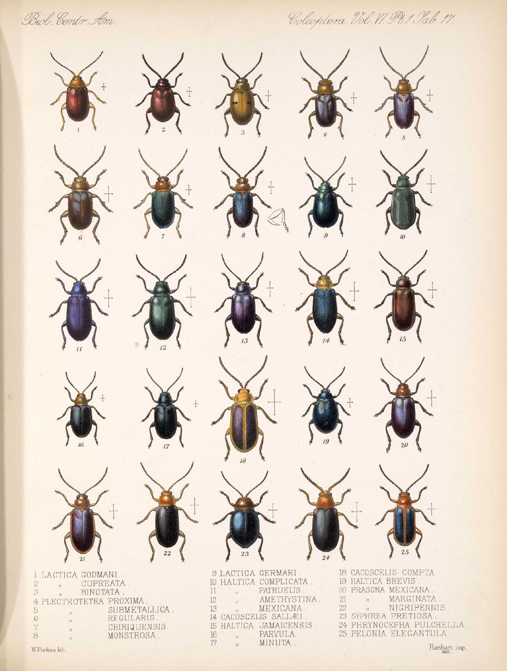 Beetles,  Image number:bca_12_06_01s_401
