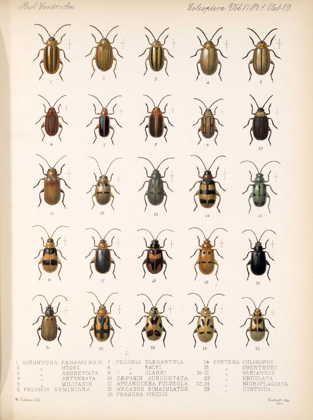 Beetles,  Image number:bca_12_06_01s_403