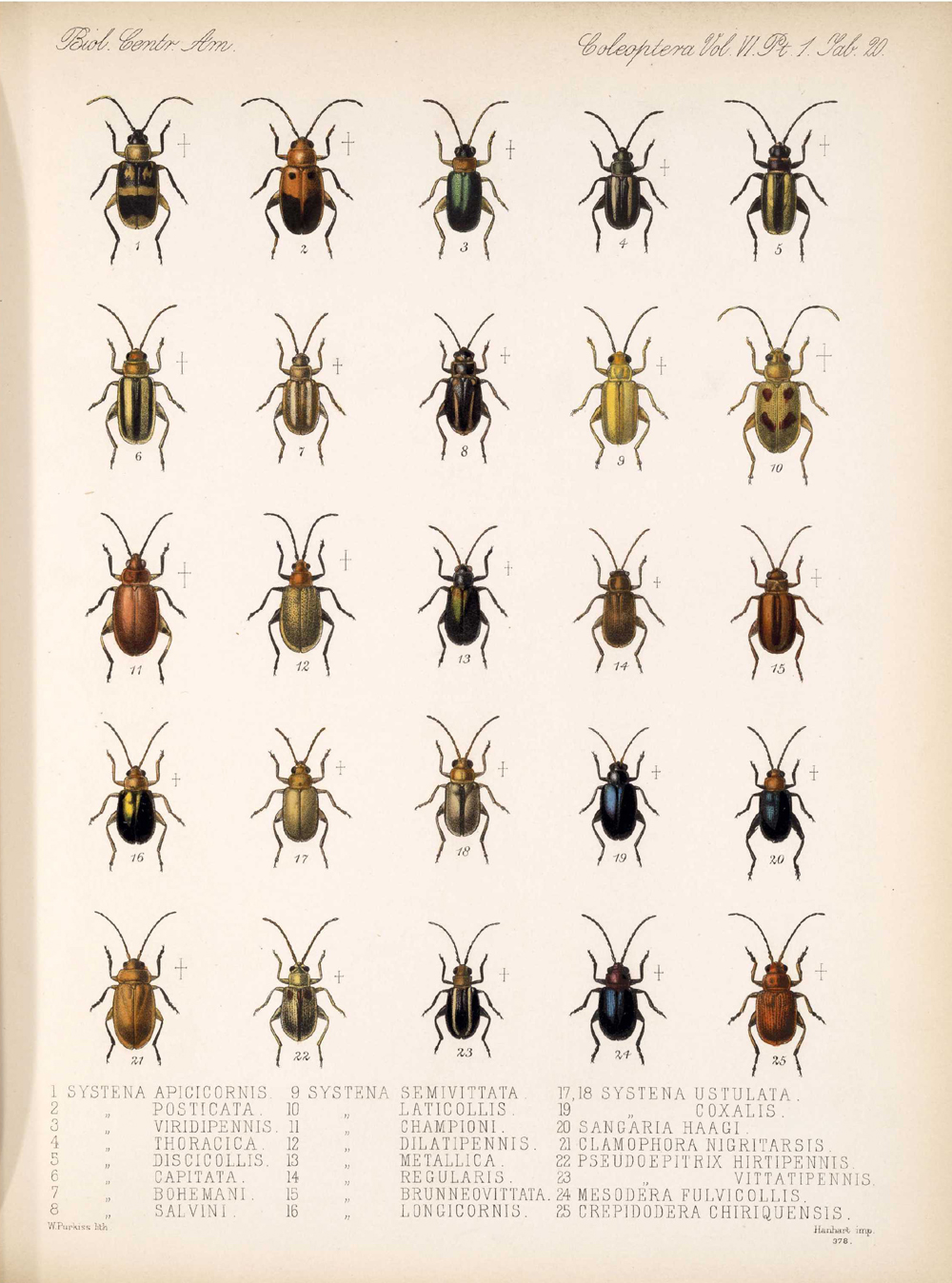Beetles,  Image number:bca_12_06_01s_404