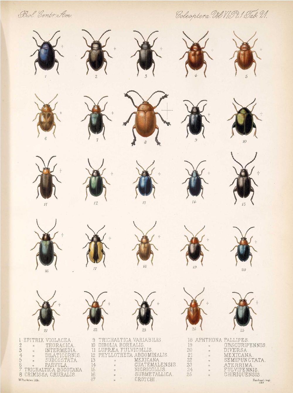 Beetles,  Image number:bca_12_06_01s_405