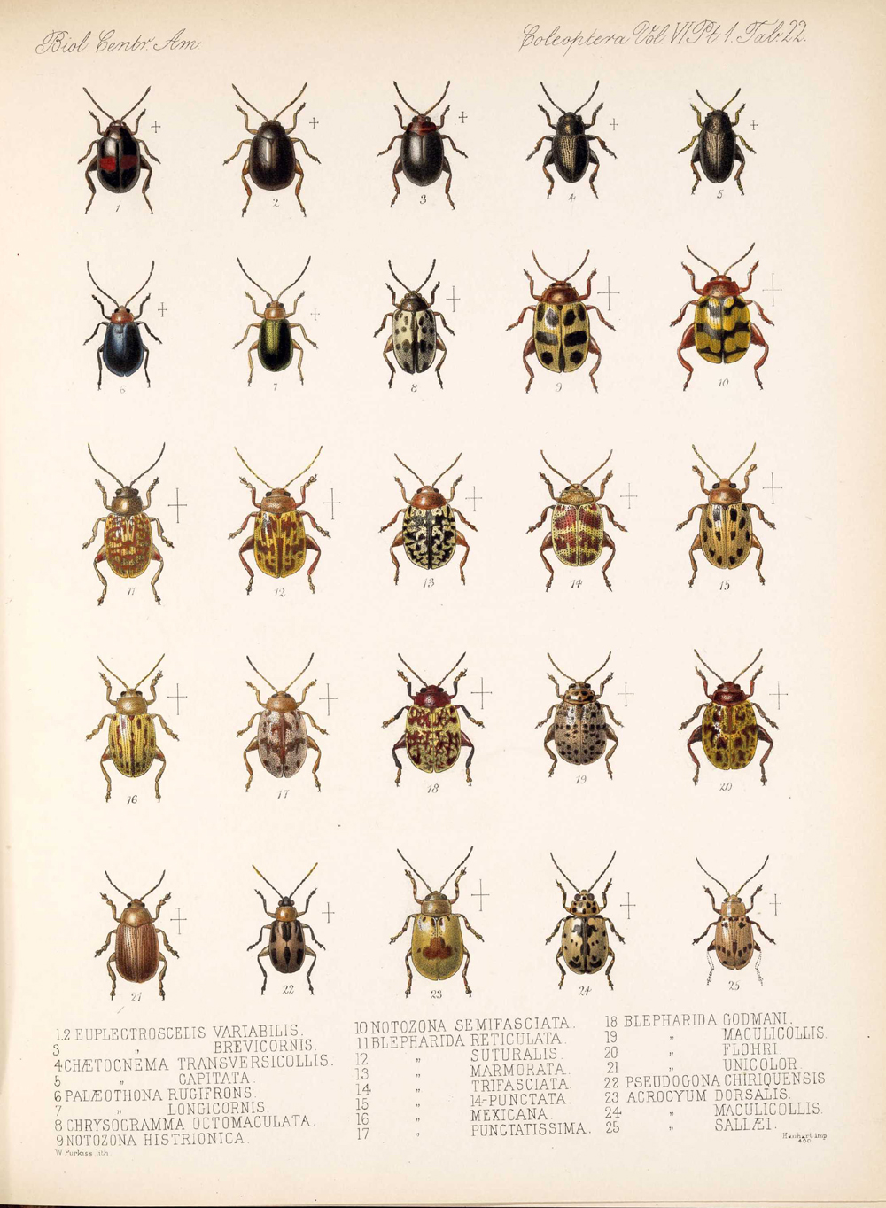 Beetles,  Image number:bca_12_06_01s_406