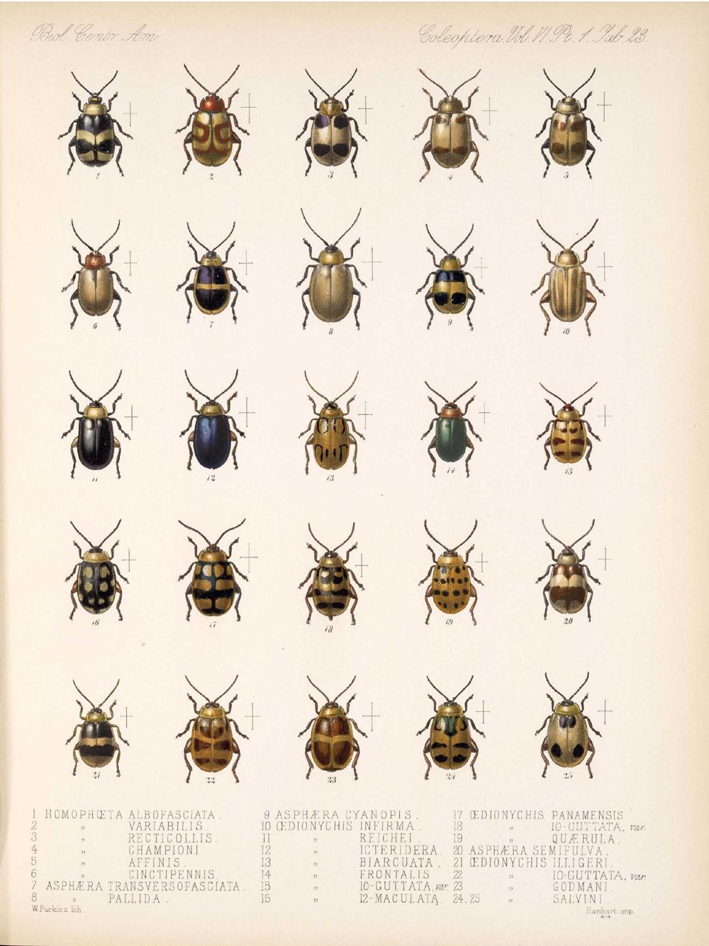 Beetles,  Image number:bca_12_06_01s_407
