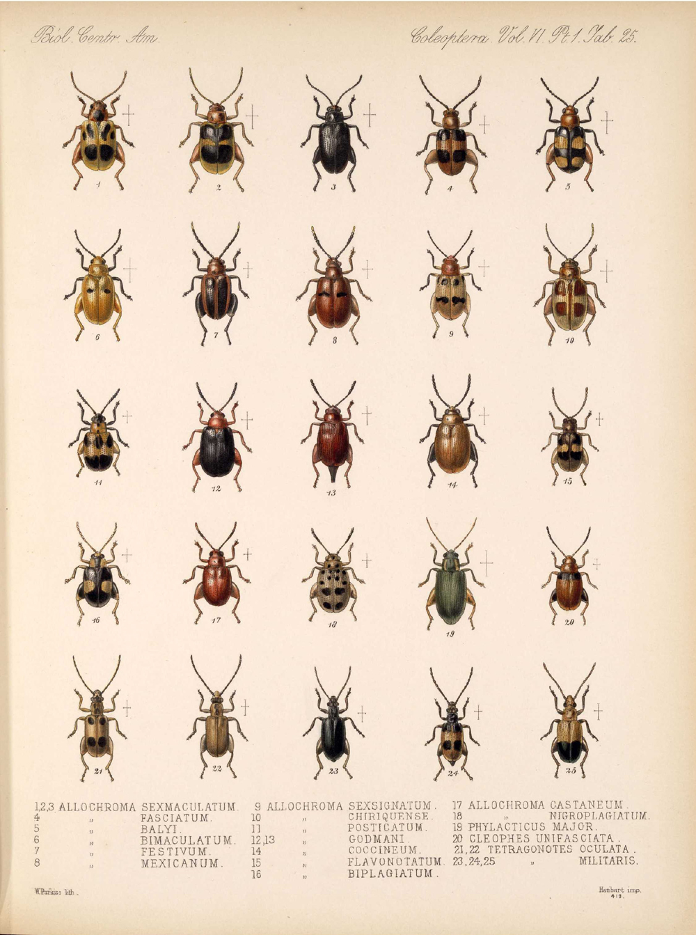 Beetles,  Image number:bca_12_06_01s_409