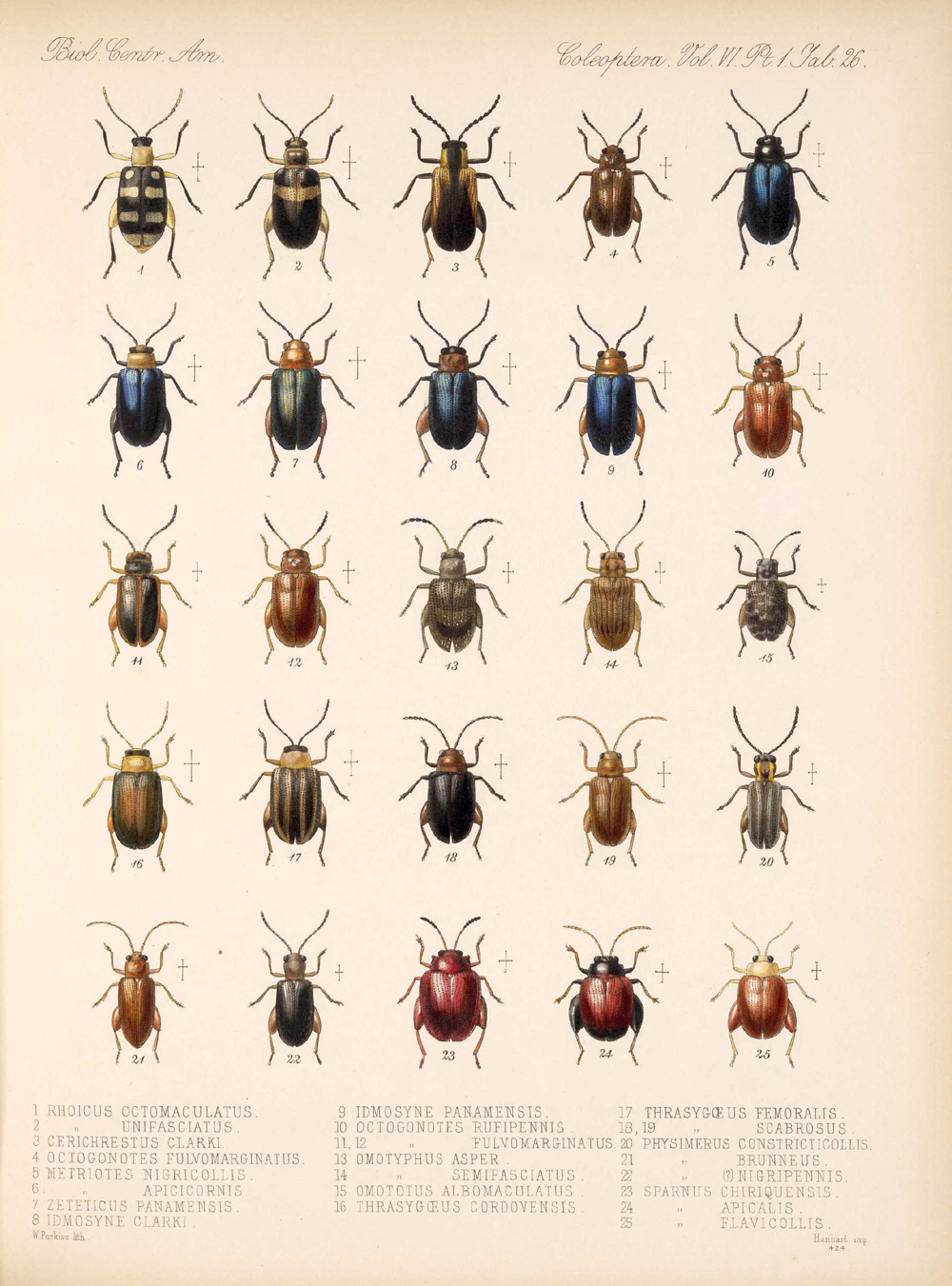 Beetles,  Image number:bca_12_06_01s_410