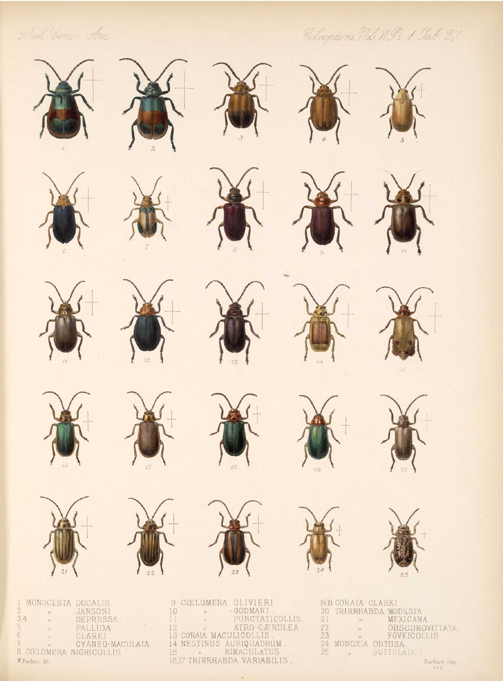 Beetles,  Image number:bca_12_06_01s_411
