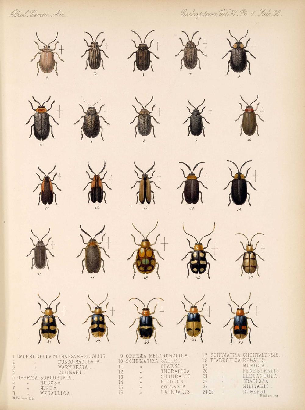 Beetles,  Image number:bca_12_06_01s_412