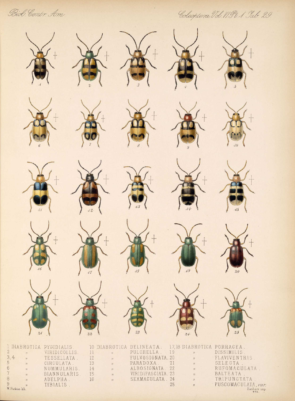 Beetles,  Image number:bca_12_06_01s_413