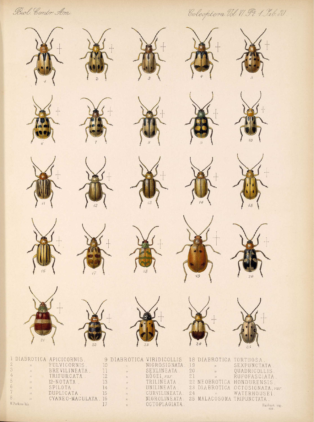 Beetles,  Image number:bca_12_06_01s_414