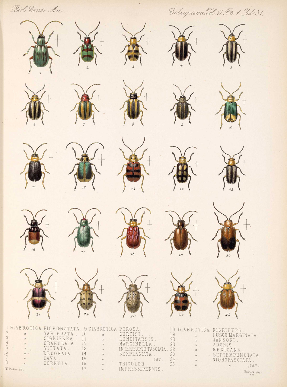 Beetles,  Image number:bca_12_06_01s_415