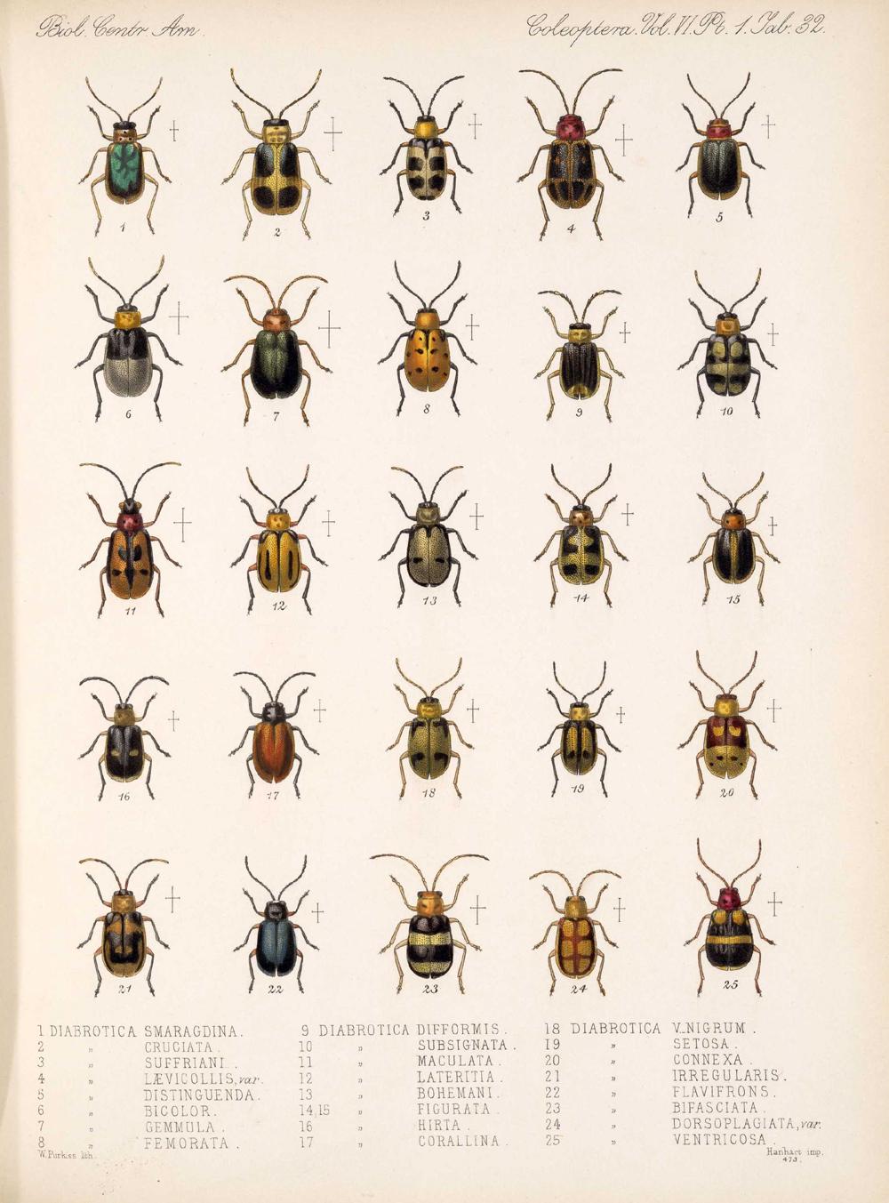 Beetles,  Image number:bca_12_06_01s_416