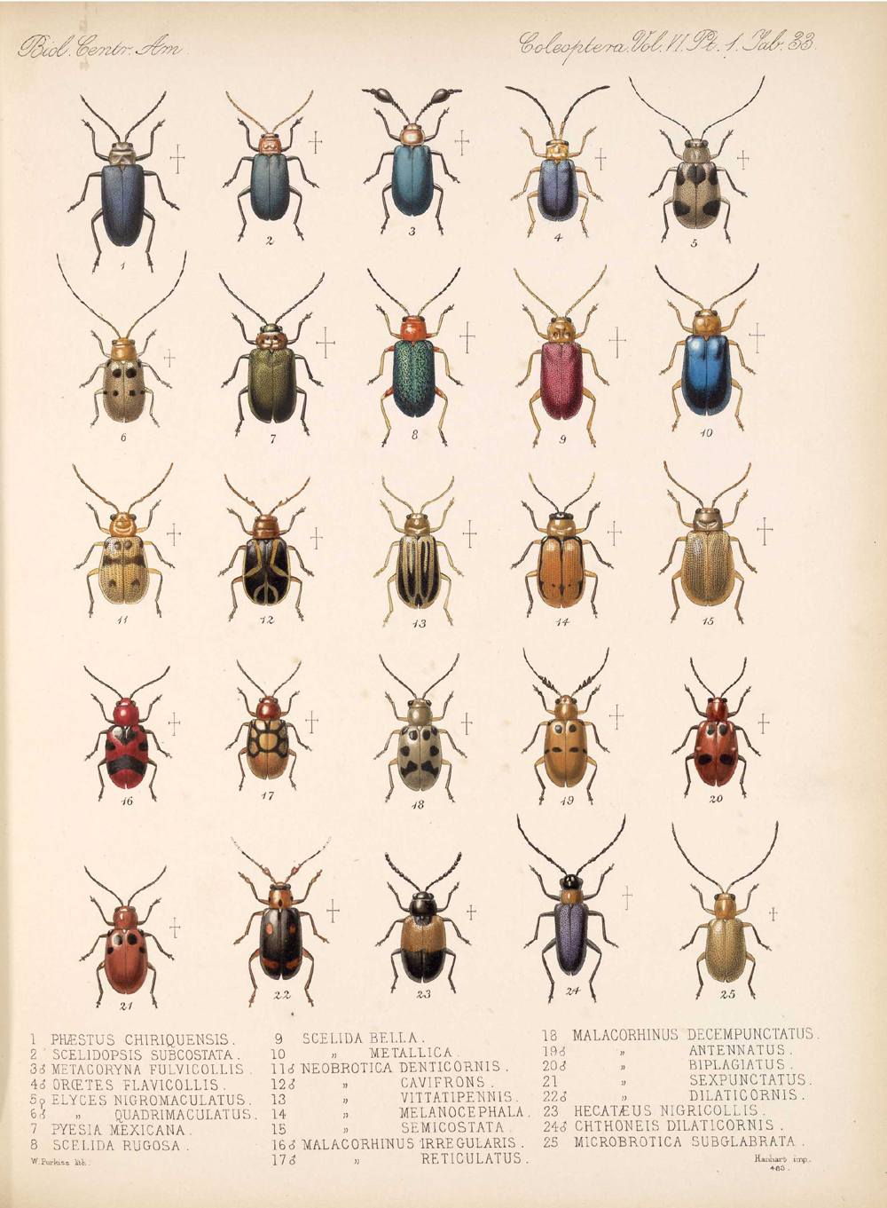 Beetles,  Image number:bca_12_06_01s_417