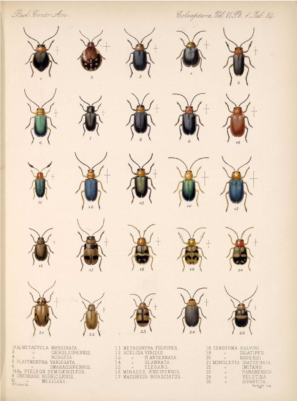 Beetles,  Image number:bca_12_06_01s_418
