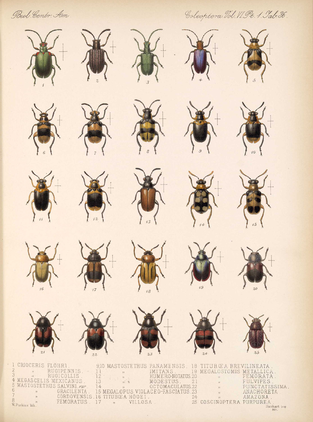 Beetles,  Image number:bca_12_06_01s_420