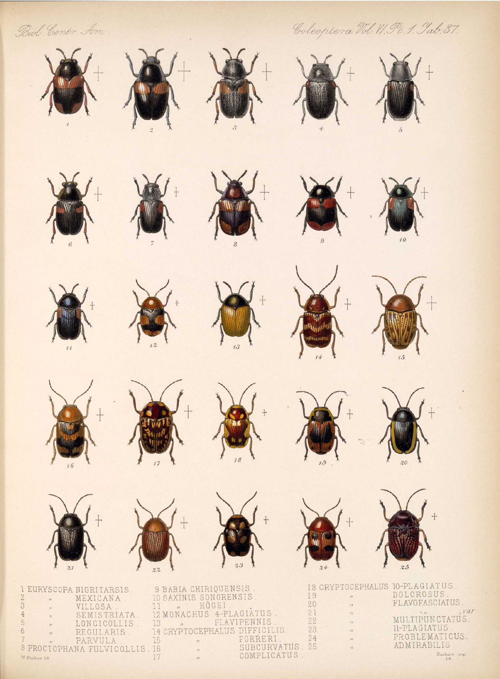Beetles,  Image number:bca_12_06_01s_421