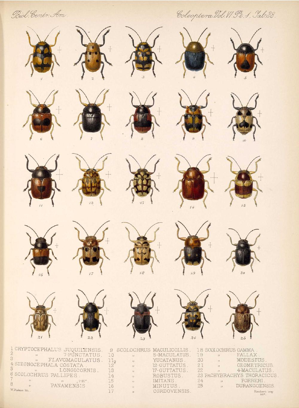 Beetles,  Image number:bca_12_06_01s_422