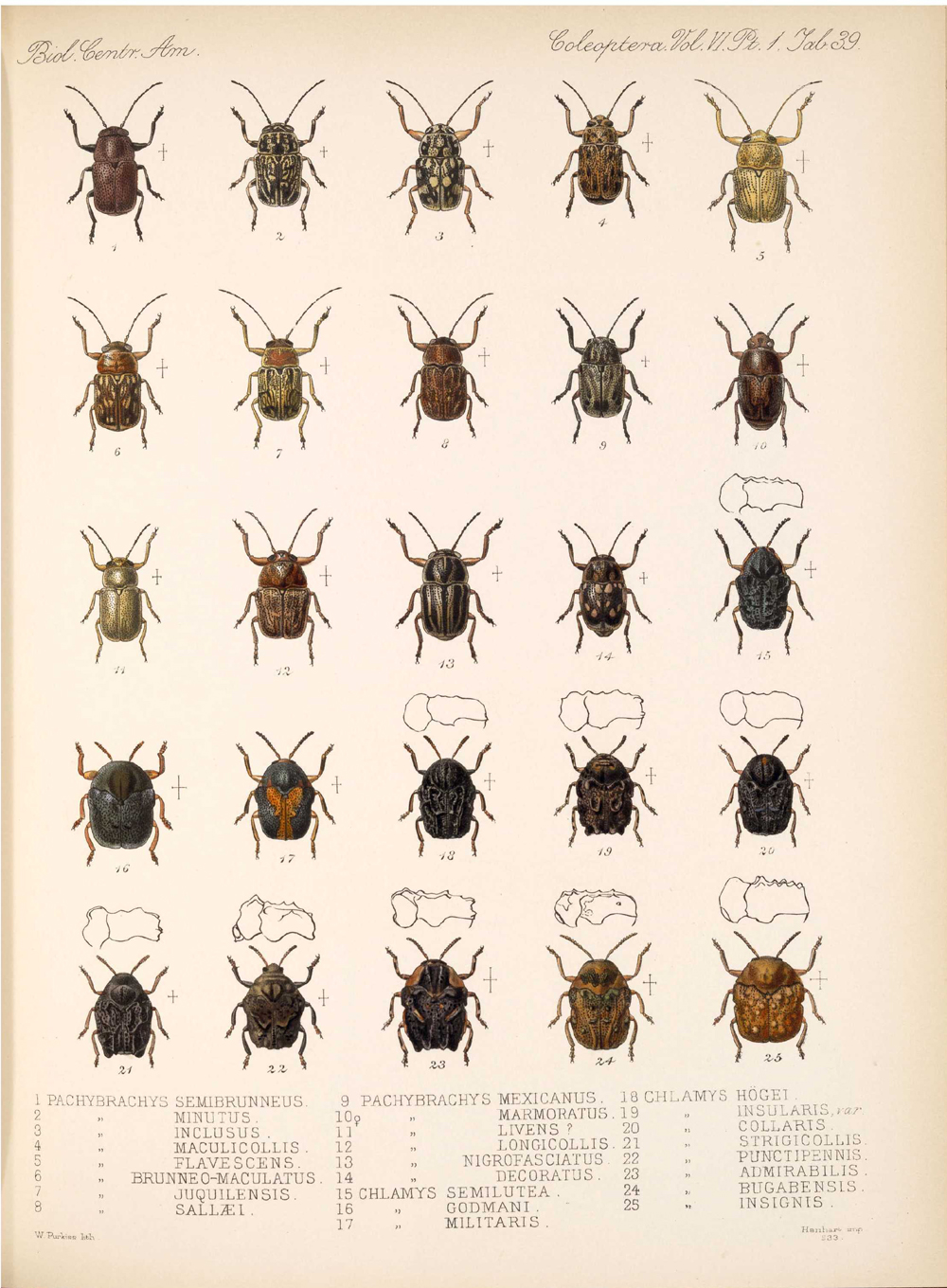 Beetles,  Image number:bca_12_06_01s_423