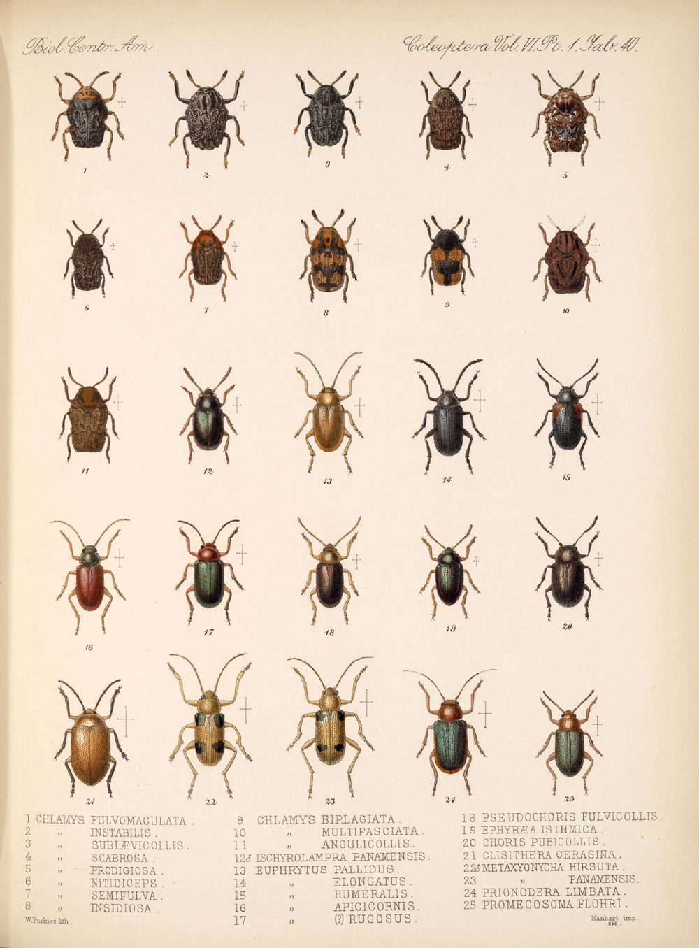 Beetles,  Image number:bca_12_06_01s_424