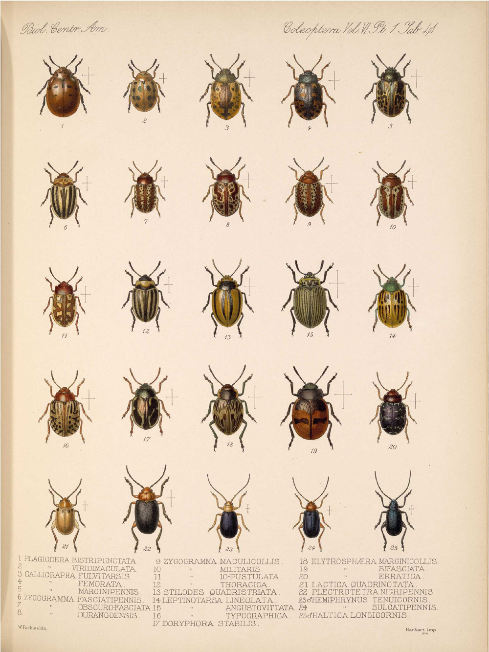 Beetles,  Image number:bca_12_06_01s_425
