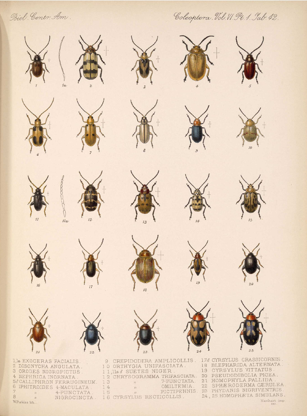Beetles,  Image number:bca_12_06_01s_426