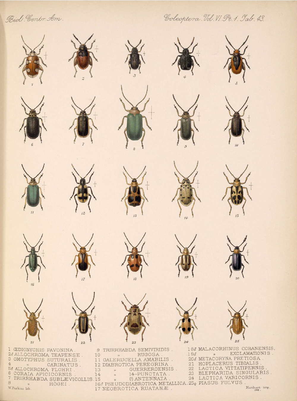 Beetles,  Image number:bca_12_06_01s_427