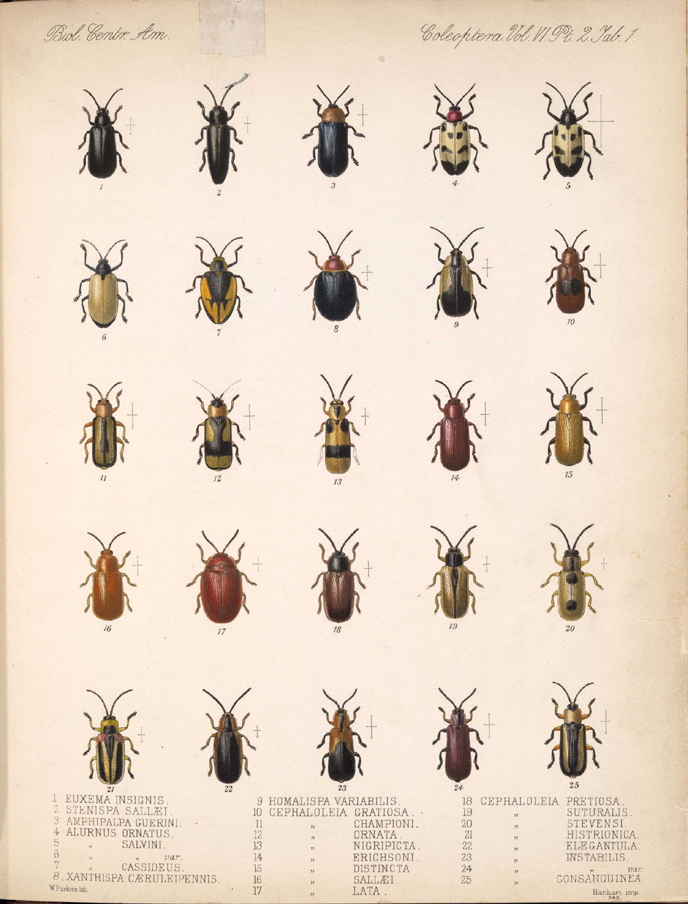 Beetles,  Image number:bca_12_06_02_269