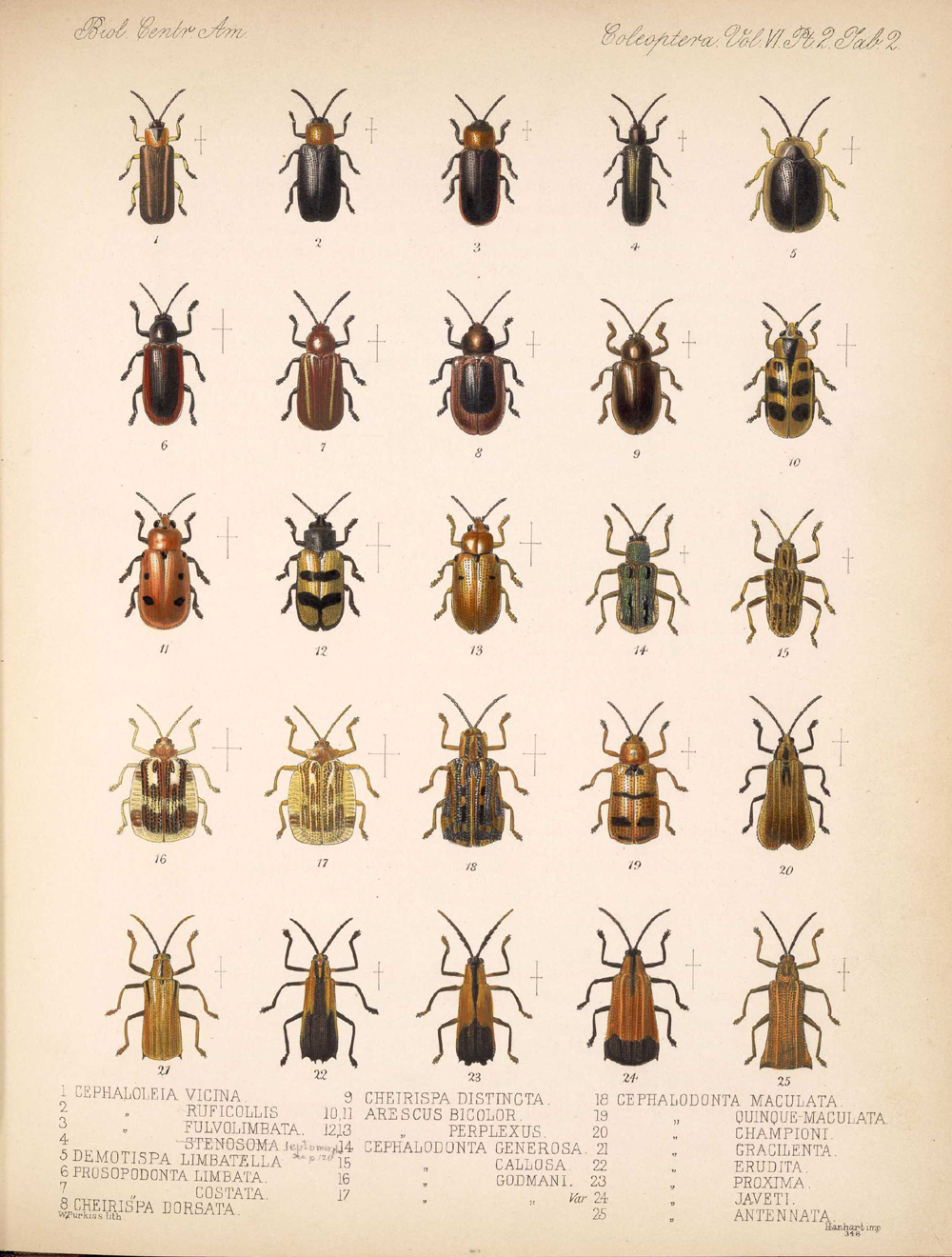 Beetles,  Image number:bca_12_06_02_270