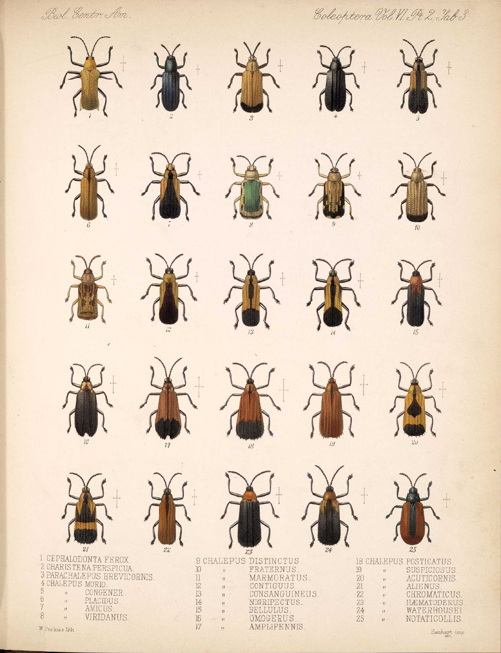 Beetles,  Image number:bca_12_06_02_271