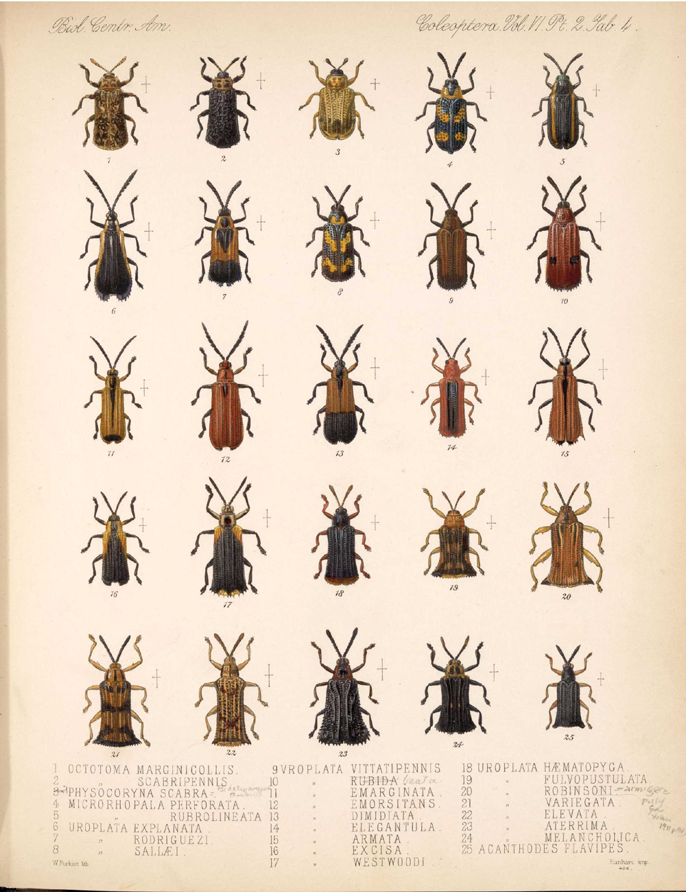Beetles,  Image number:bca_12_06_02_272