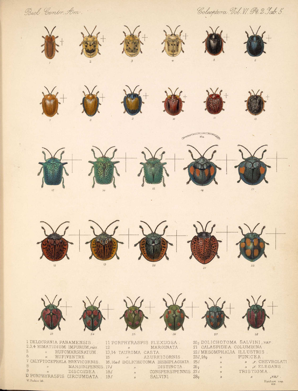 Beetles,  Image number:bca_12_06_02_273