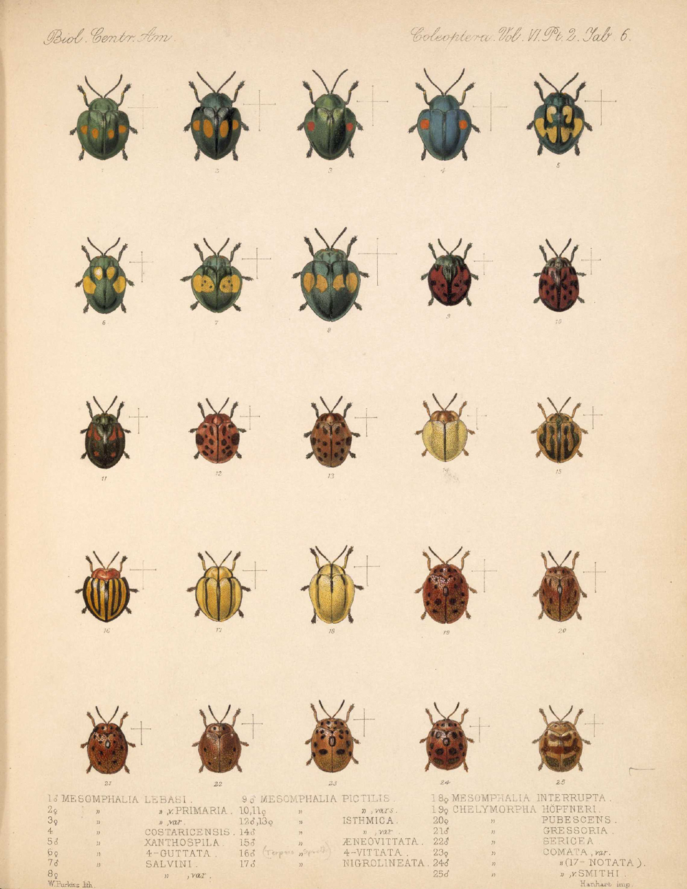 Beetles,  Image number:bca_12_06_02_274