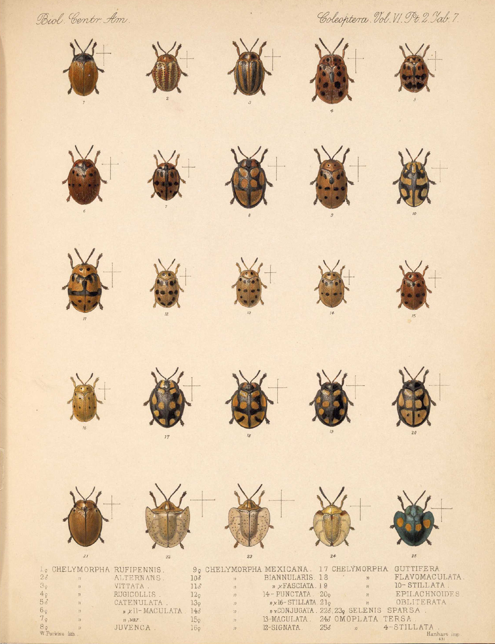 Beetles,  Image number:bca_12_06_02_275