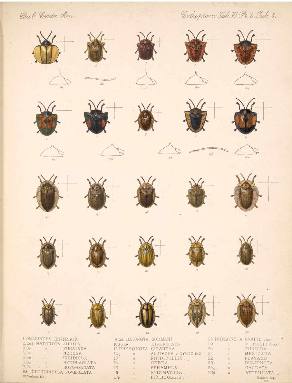 Beetles,  Image number:bca_12_06_02_276