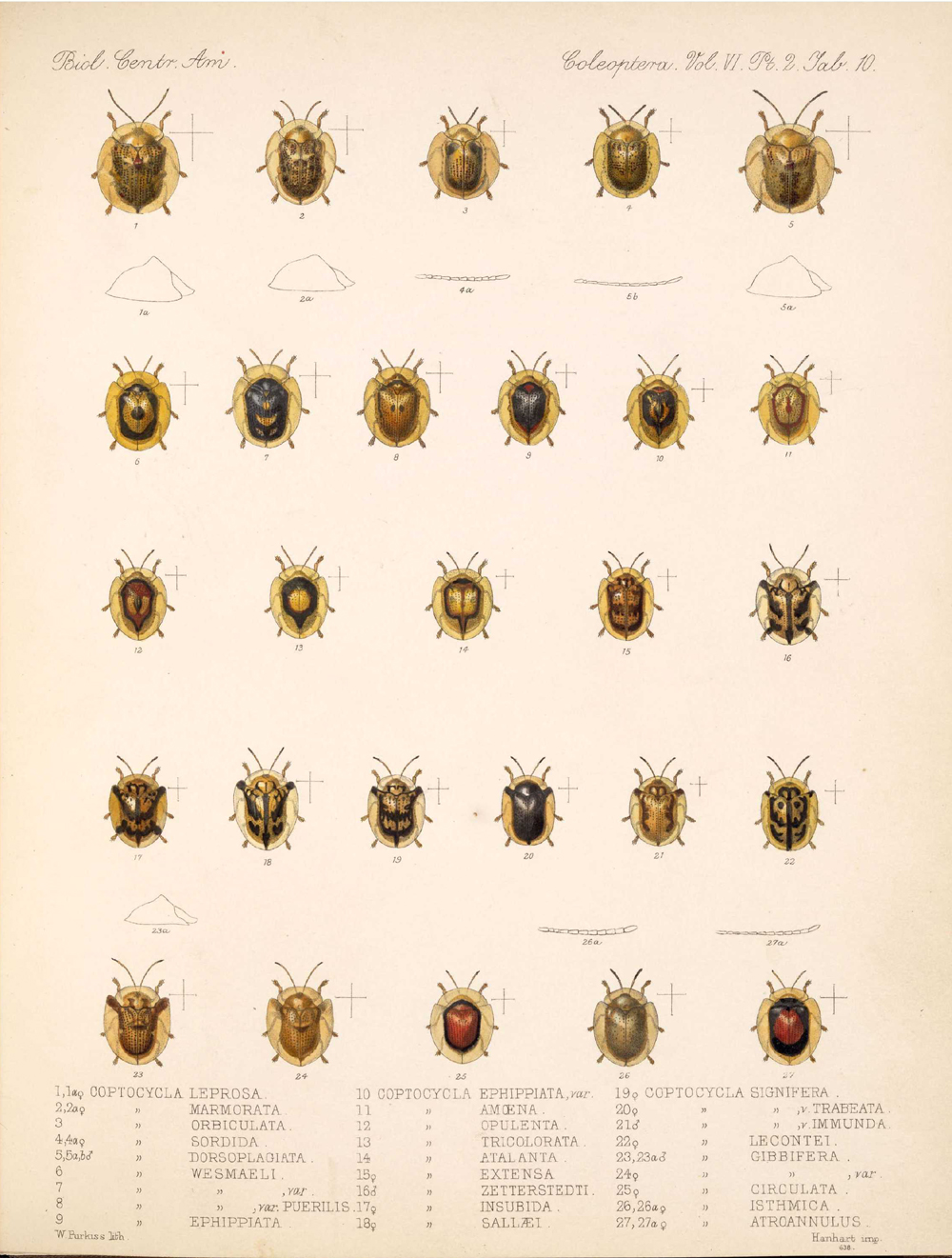 Beetles,  Image number:bca_12_06_02_278