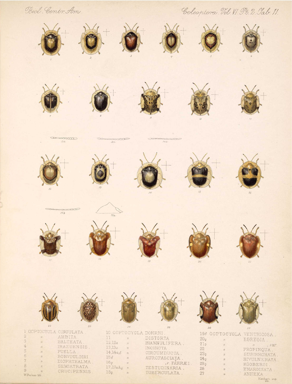 Beetles,  Image number:bca_12_06_02_279