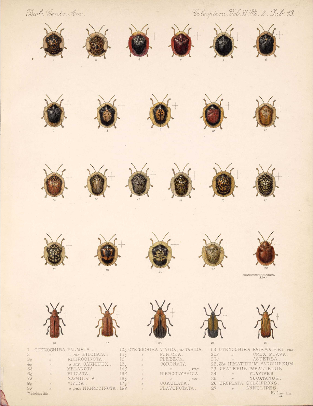 Beetles,  Image number:bca_12_06_02_281