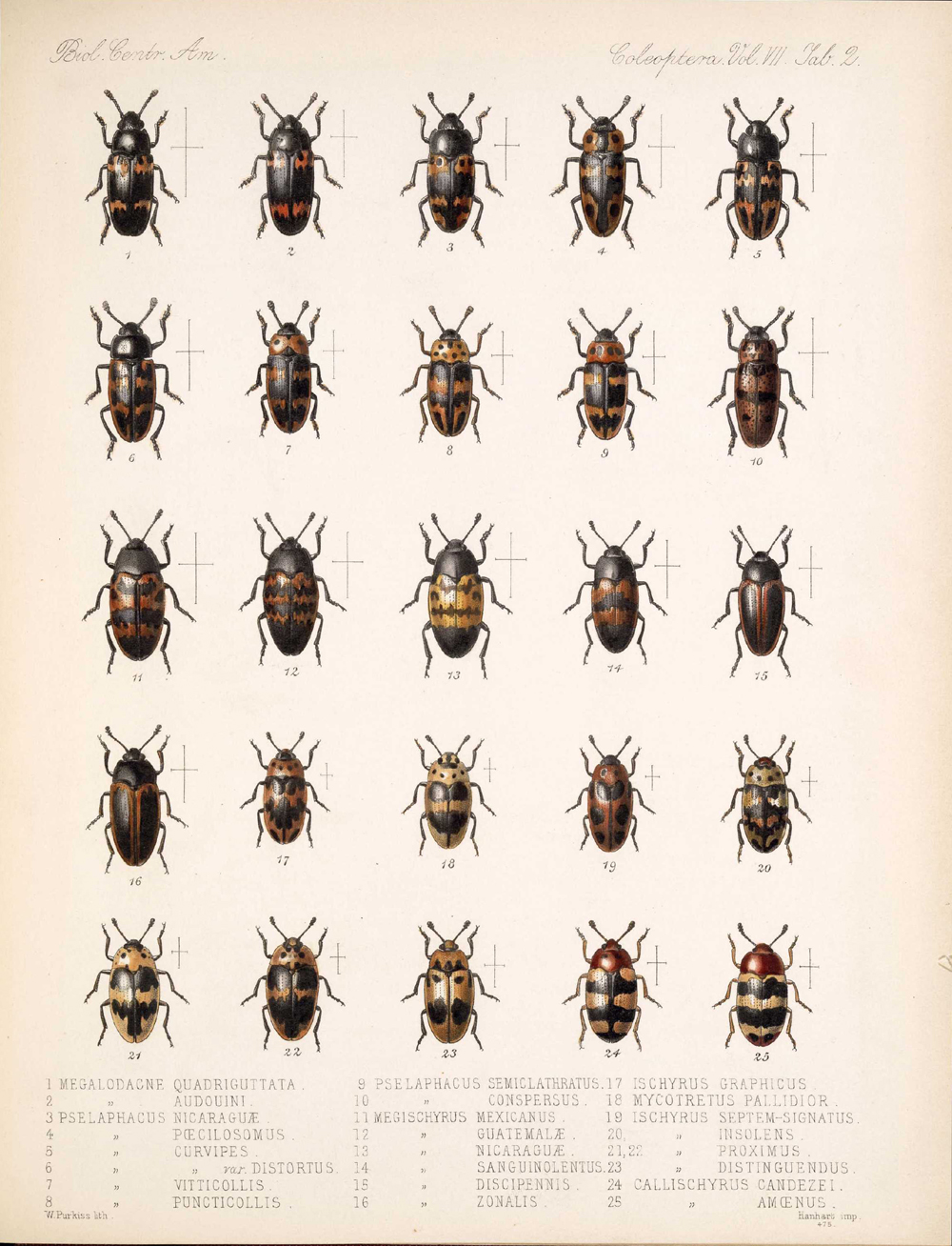 Beetles,  Image number:bca_12_07_00_296