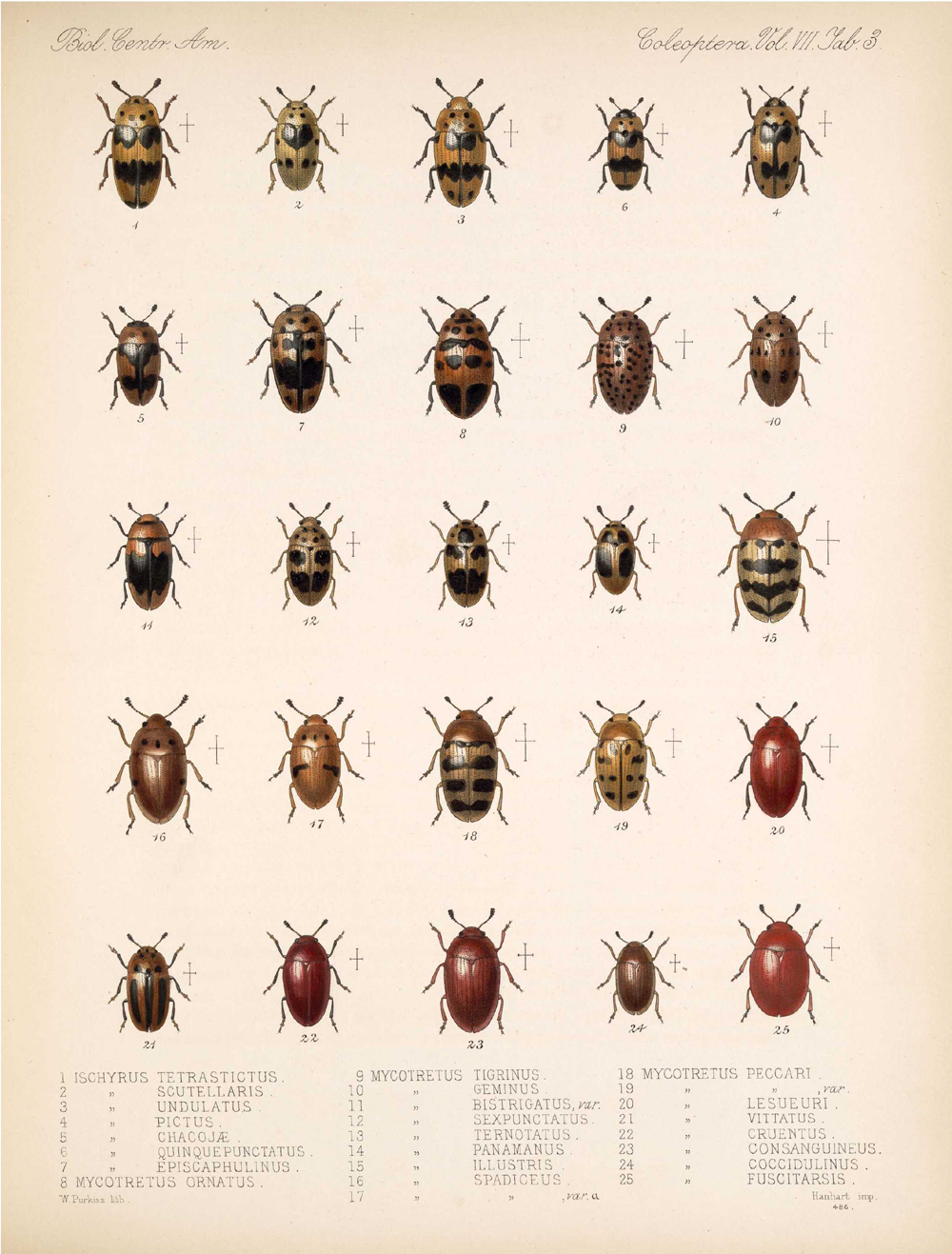 Beetles,  Image number:bca_12_07_00_297