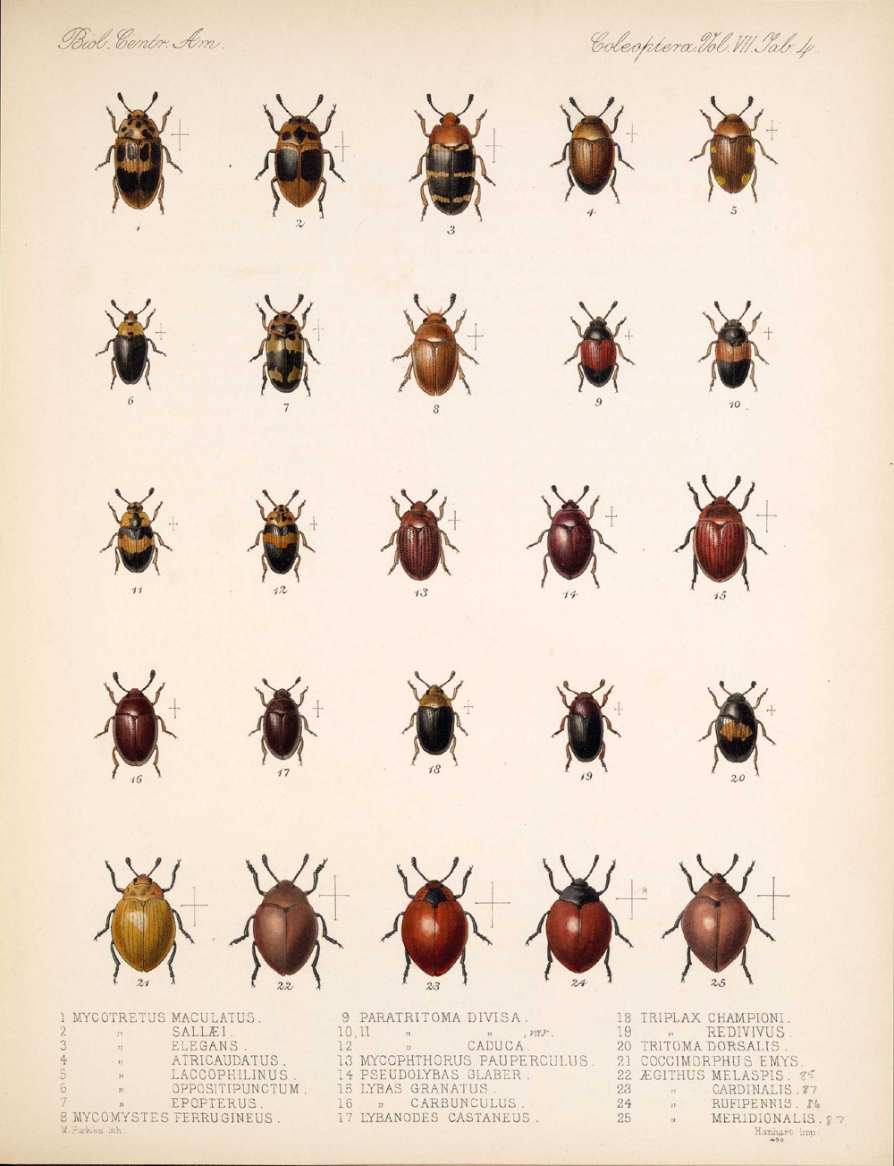 Beetles,  Image number:bca_12_07_00_298