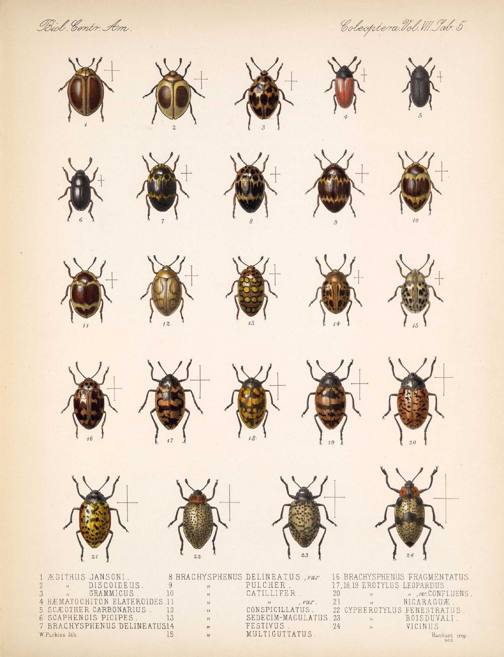 Beetles,  Image number:bca_12_07_00_299