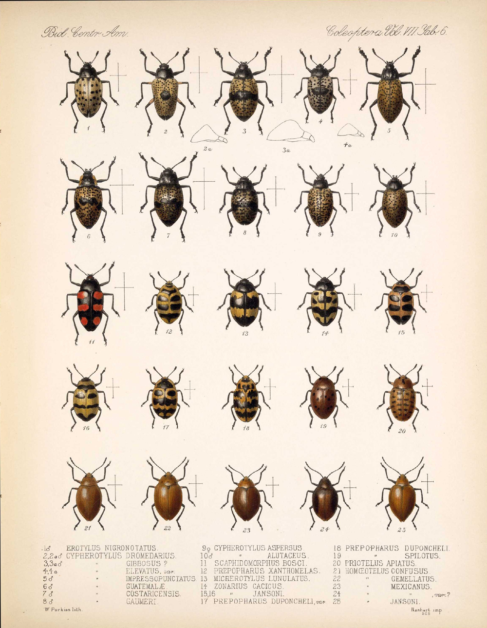 Beetles,  Image number:bca_12_07_00_300
