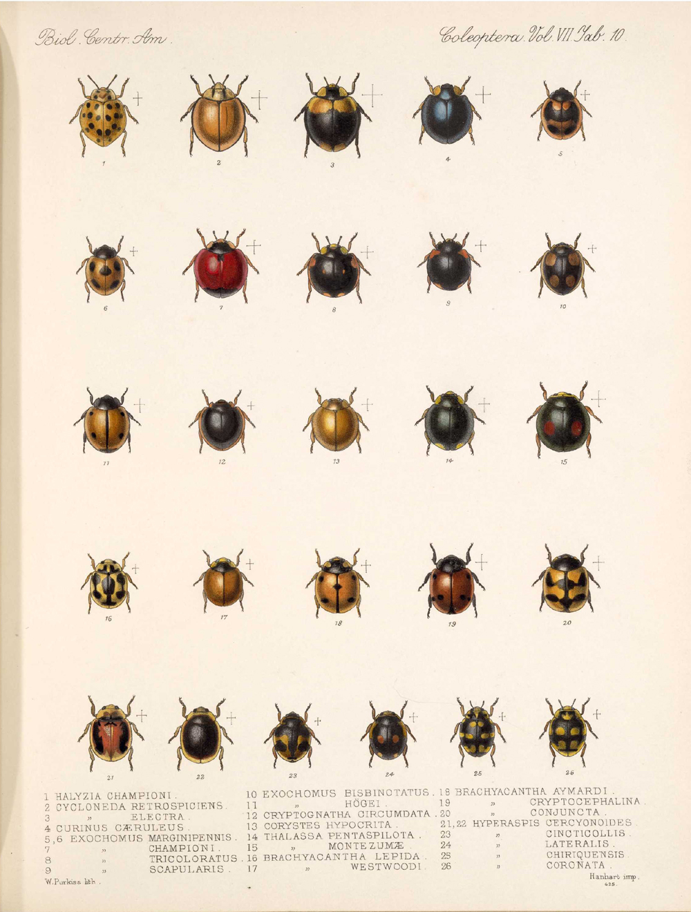 Beetles,  Image number:bca_12_07_00_305